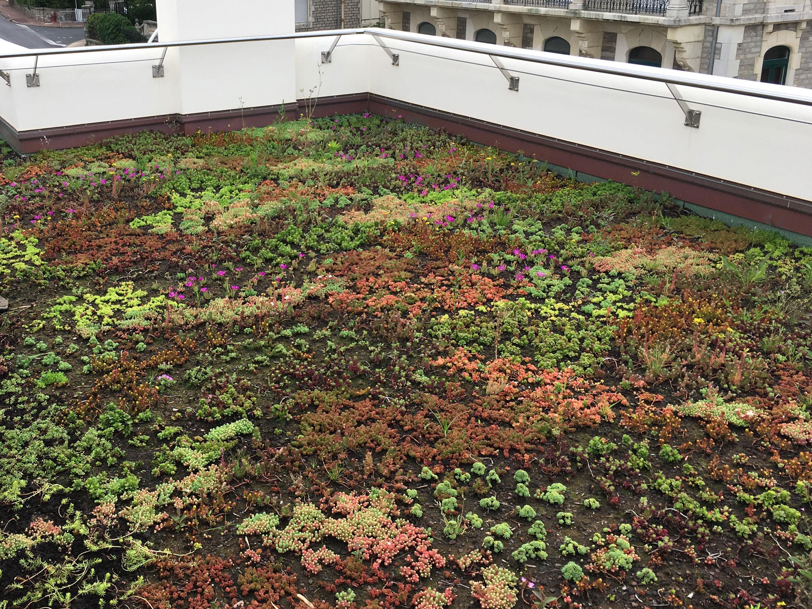 Floriparc, toit terrasse vegetalisée Biarritz