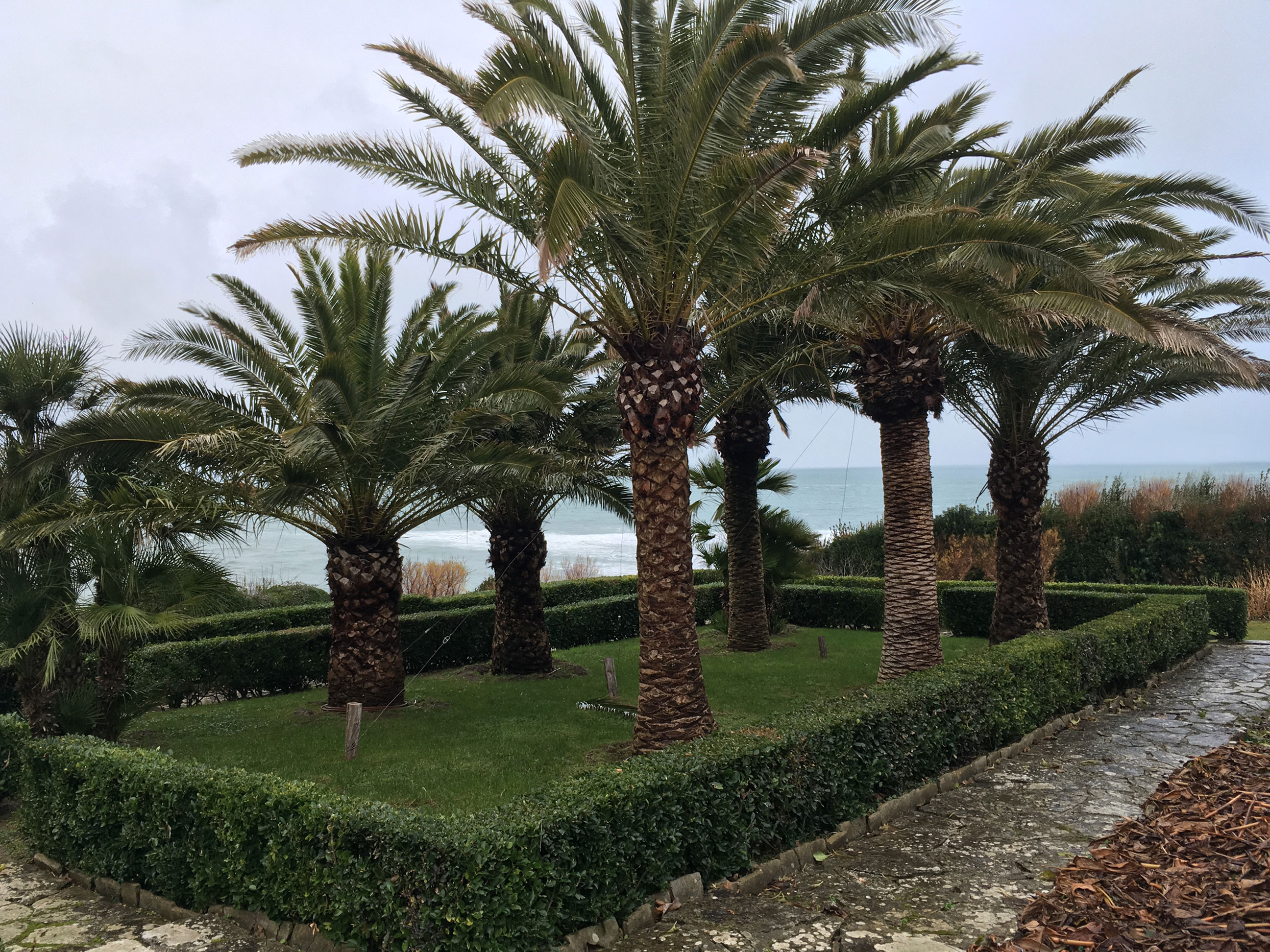 Palmiers en front d'océan
