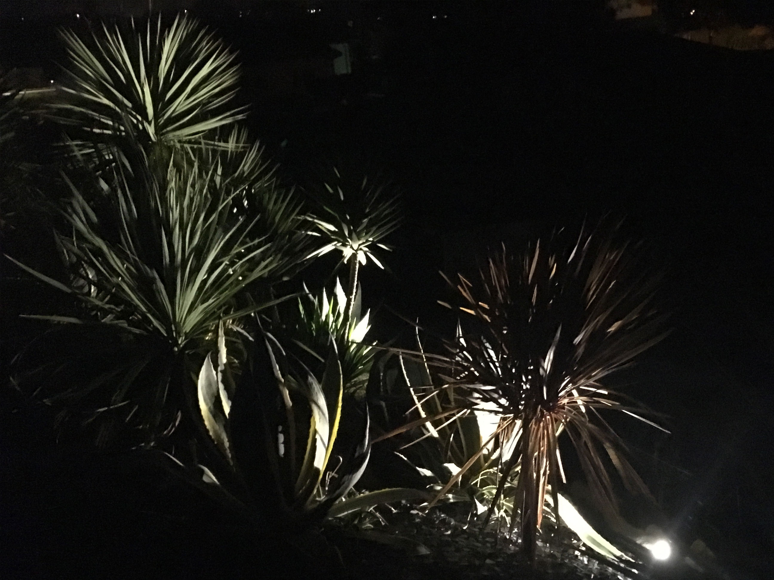 Floriparc, éclairage nocturne